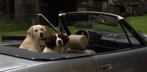 honden in auto1