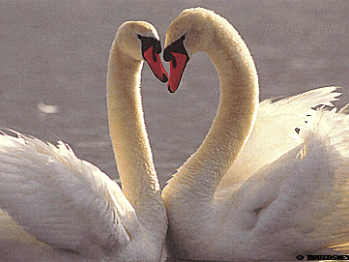 Een romantische Valentijnsdag
