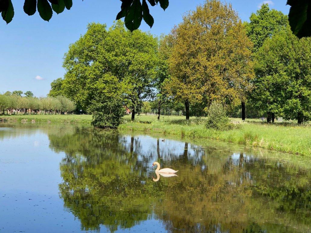 Zwemvijver Kasteel Sterkenburg