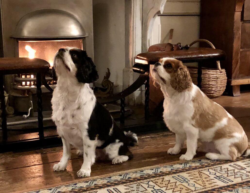 Honden met oudjaar
