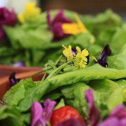 Salade met bloem, Mirjam Verschoor kopie