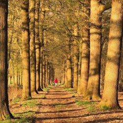 Wandelen op het landgoed Sterkenburg