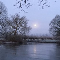 Winter vijver
