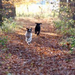 wandelen in bos