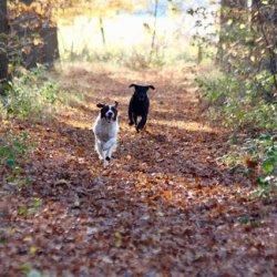 Honden rennen in een bos